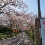 20140415_tokiwa-entry-01[1]